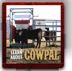 Learn About Cowpal