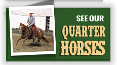 See our Quarter Horses